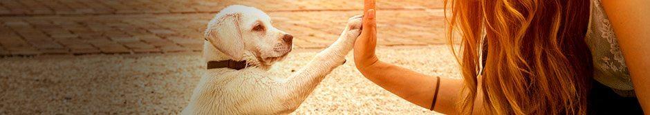 Voor huisdieren & dierenvrienden