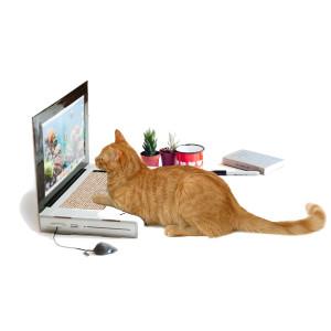 Cattop – Laptop krabpaal voor de kat