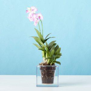 Cube - de transparante bloempot