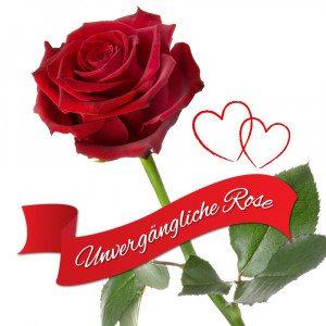 De eeuwig bloeiende roos